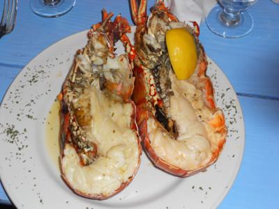 anageda-lobster